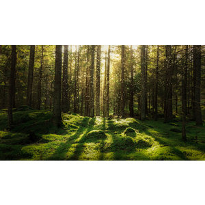 Karo-art Fotobehang - Magisch bos