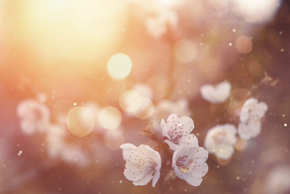 Karo-art Fotobehang - Lente bloesem