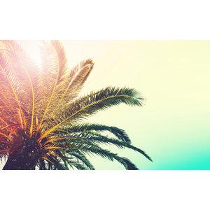Karo-art Fotobehang - Palmboom