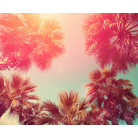 Karo-art Fotobehang - Palmbomen