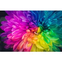 Karo-art Fotobehang - Regenboog bloem