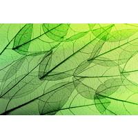Karo-art Fotobehang - Skelet van bladeren, Groen