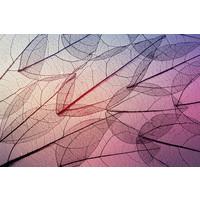 Karo-art Fotobehang - Skelet van bladeren, Paars