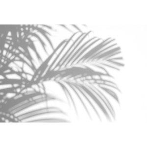Karo-art Fotobehang - Schaduw van palmbladeren