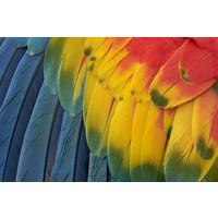 Karo-art Fotobehang - Veren papegaai