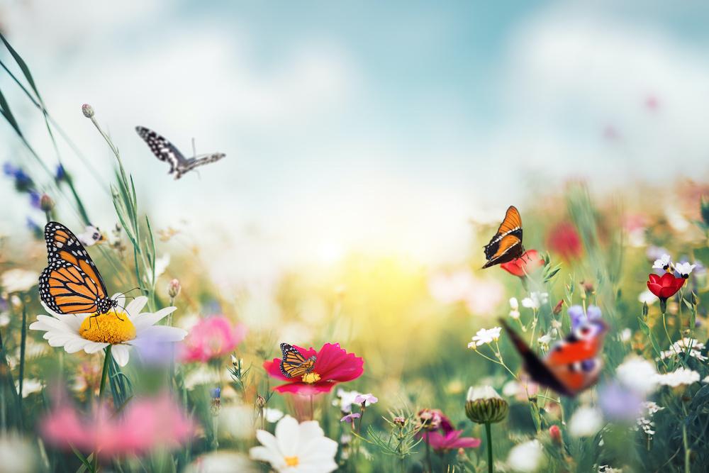 Karo-art Fotobehang - zomerweide met vlinders