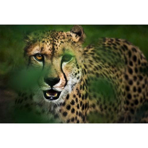 Karo-art Schilderij - Cheeta in hoog gras , Groen/Geel, 2 maten, Premium print