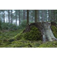 Karo-art Schilderij - Boomstronk , Groen,  2 maten, Premium print