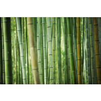 Karo-art Schilderij - Bamboe , Groen,  2 maten, Premium print