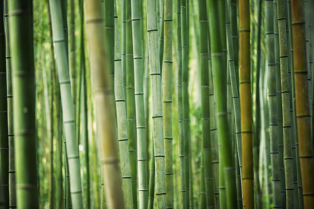 Schilderij - Bamboe , Groen, 2 maten, Premium print