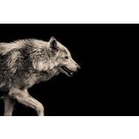 Karo-art Schilderij - Grijze wolf, 2 maten, Premium print