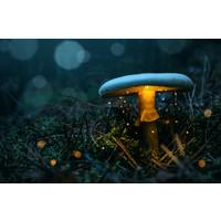 Karo-art Schilderij - Magische paddenstoel,  2 maten, Premium print