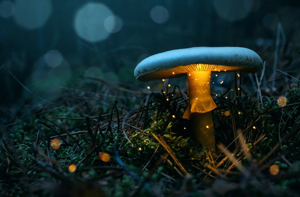 Schilderij - Magische paddenstoel, 2 maten, Premium print