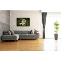 Karo-art Schilderij - Portret van Tijger,  2 maten, Premium print