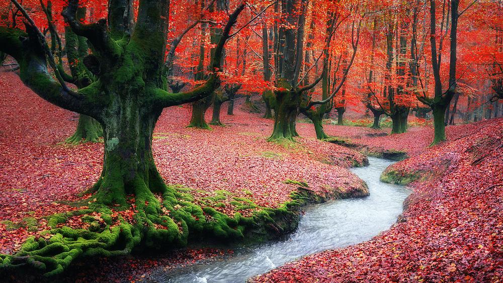 Karo-art Schilderij - Rood bos , 2 maten, Premium print