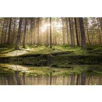Karo-art Schilderij - Vijver in het bos ,  2 maten, Premium print