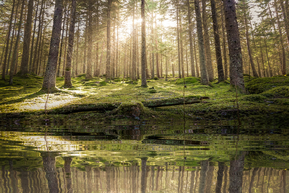 Schilderij - Vijver in het bos , 2 maten, Premium print