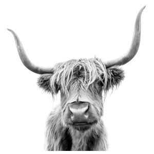 Karo-art Afbeelding op acrylglas - Hoogland koe,  premium print, 3 maten