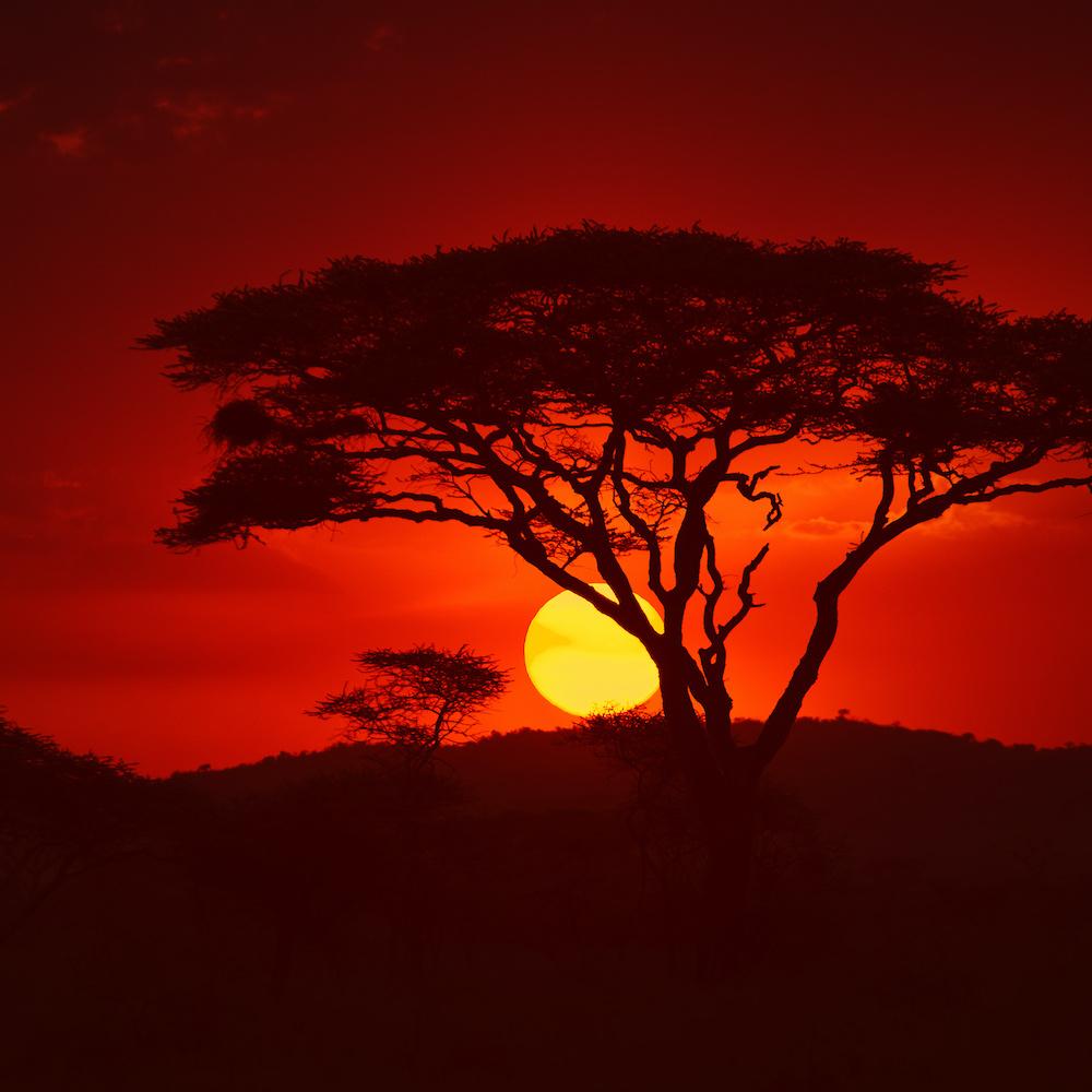 Schilderij - Zonsondergang in Afrika, premium print, 3 maten