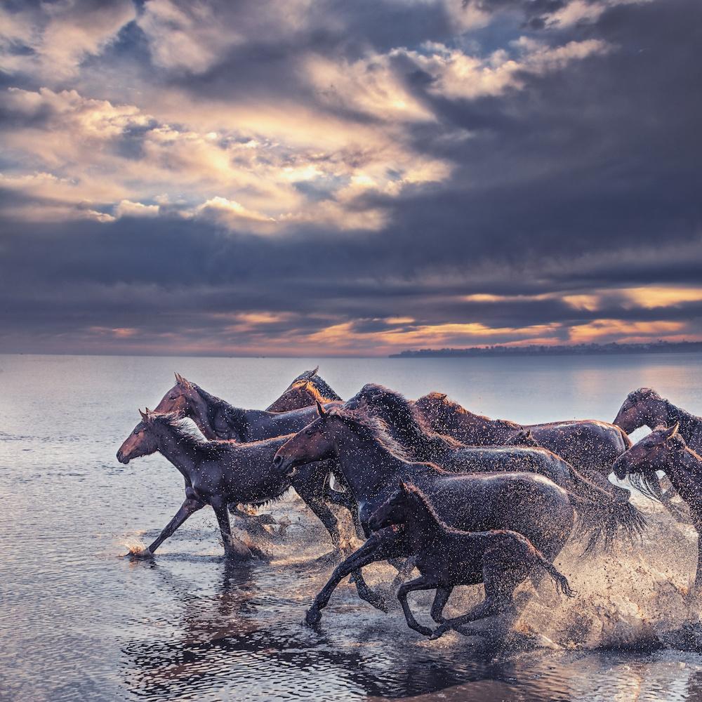 Schilderij - Wilde paarden , premium print, 3 maten