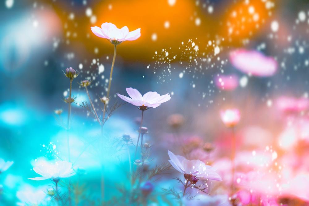 Schilderij - Magische bloemen, 2 maten, Premium print