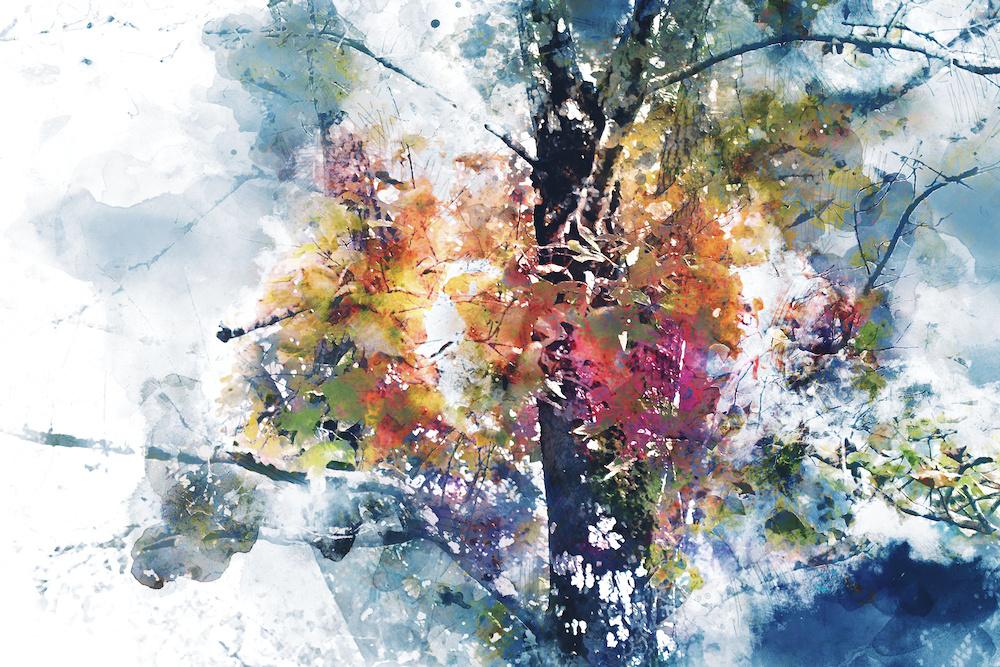 Schilderij - Boom in herfst (print op canvas), 2 maten, Premium print