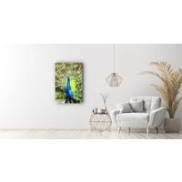 Karo-art Schilderij - Pauw (print op canvas),  2 maten, Premium print