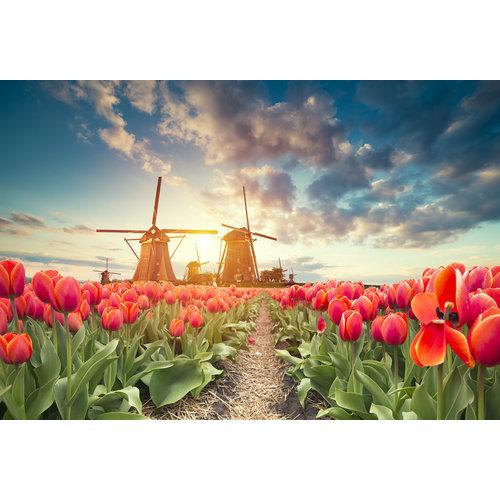 Karo-art Schilderij - Tulpen en molens,  2 maten, Premium print