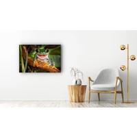 Karo-art Schilderij - Vrolijke kikker,  2 maten, Premium print