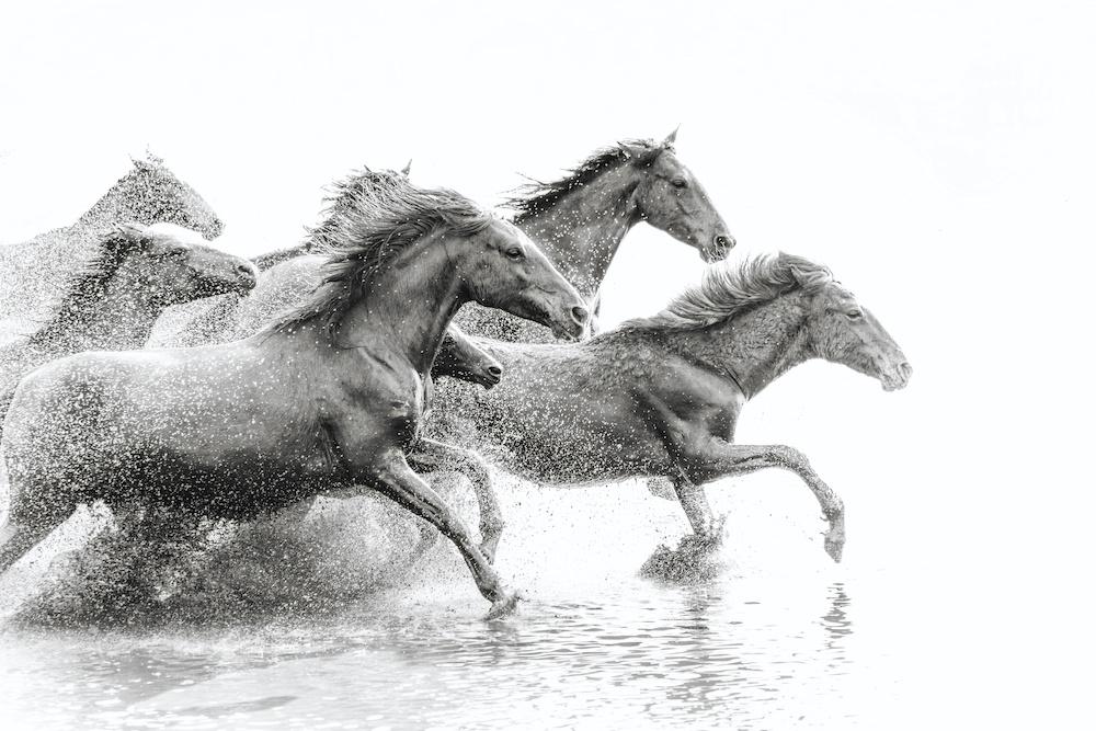 Schilderij - Wilde paarden, 2 maten, Premium print