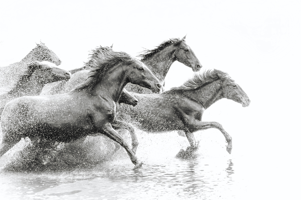 Karo-art Schilderij - Wilde paarden, 2 maten, Premium print