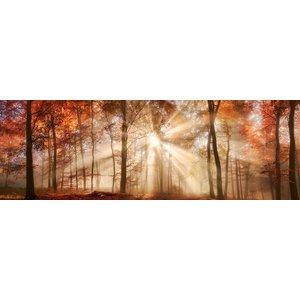 Karo-art Schilderij - Zonnestralen in het bos, herfst, panorama, 2 maten