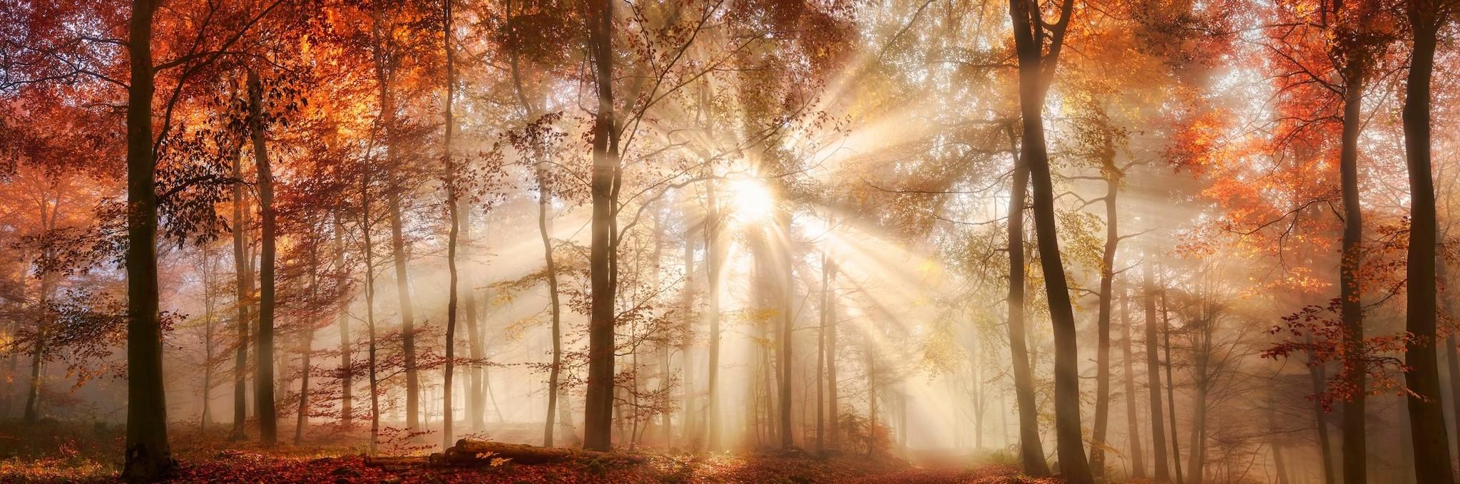 Schilderij - Zonnestralen in het bos, herfst, panorama, 2 maten