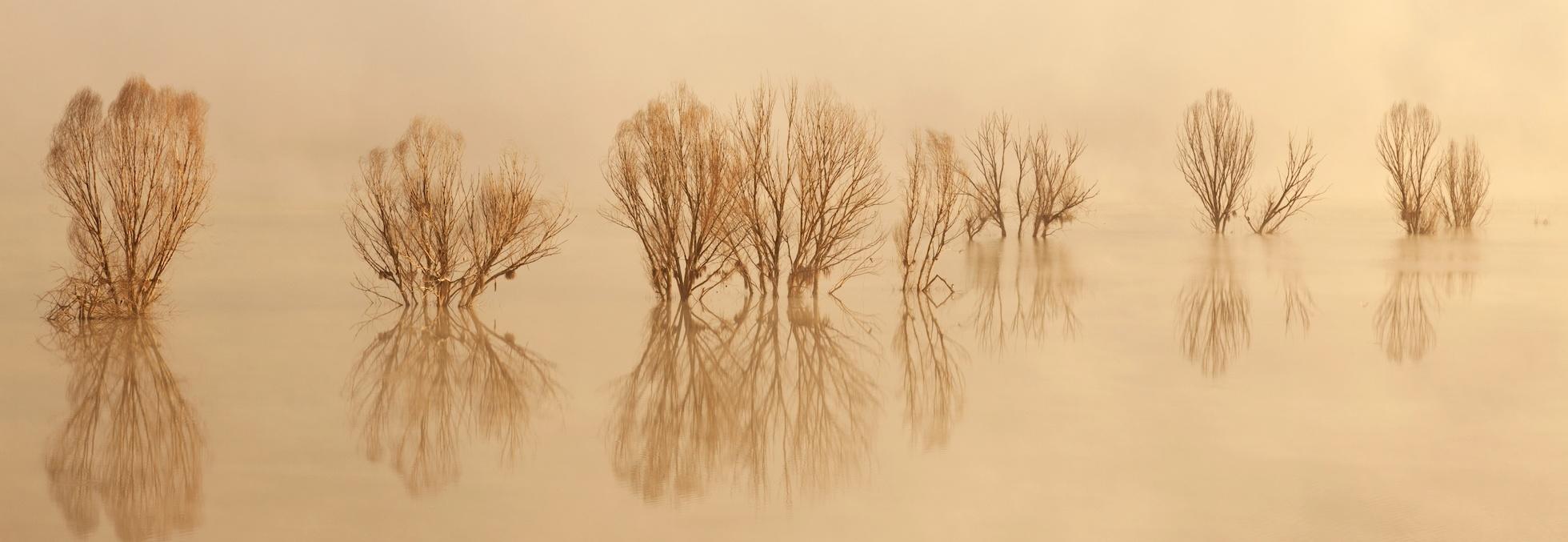 Schilderij - Bomen in een meer, beige, panorama, 2 maten