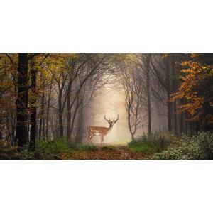 Karo-art Schilderij -Hert in het bos, premium print  , 2 maten (wanddecoratie)