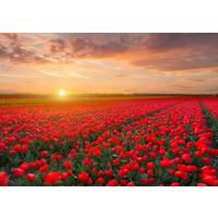 Karo-art Schilderij - Veld vol tulpen, prachtige kleuren, 2 maten