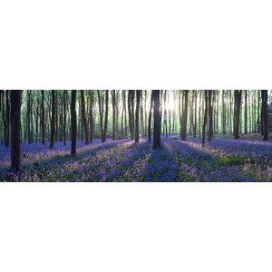 Karo-art Schilderij -Lavendel in het bos, 120x40cm. Wanddecoratie, premium print