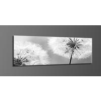 Schilderij - Paardenbloem in zwart/wit,   120x40cm.  incl ophang haakjes
