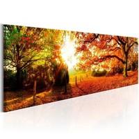 Schilderij - Zonnig Bos,   120x40cm.  Incl. ophang haakjes