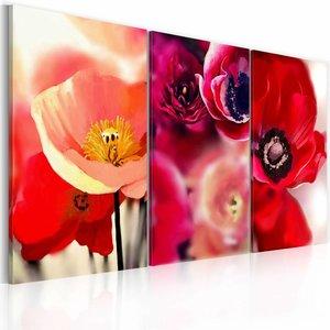 Schilderij - Klaprozen - drie perspectieven , multi kleur rood , 3 luik , 120x80cm