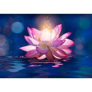 Karo-art Schilderij - Betoverende Lotus, 2 maten, premium print