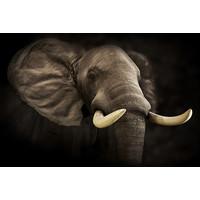 Karo-art Schilderij -Imposante Olifant, dieren,  100x70cm, Premium print