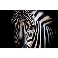 Karo-art Schilderij -Zebra close up, magisch, 100x70cm, wanddecoratie