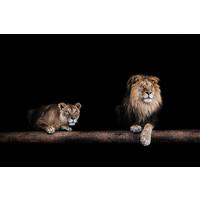 Karo-art Schilderij -Leeuw en Leeuwin, 2 maten, wanddecoratie