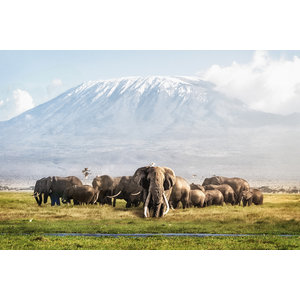 Karo-art Schilderij -Kudde Olifanten bij de Kilimanjaro 100x70cm, wanddecoratie