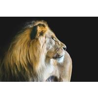 Karo-art Schilderij -Waakzame Leeuw, 2 maten, premium print, wanddecoratie