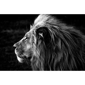 Karo-art Schilderij -Zijprofiel van een Leeuw, Koning van de Jungle, zwart/wit, 100x70cm. premium print