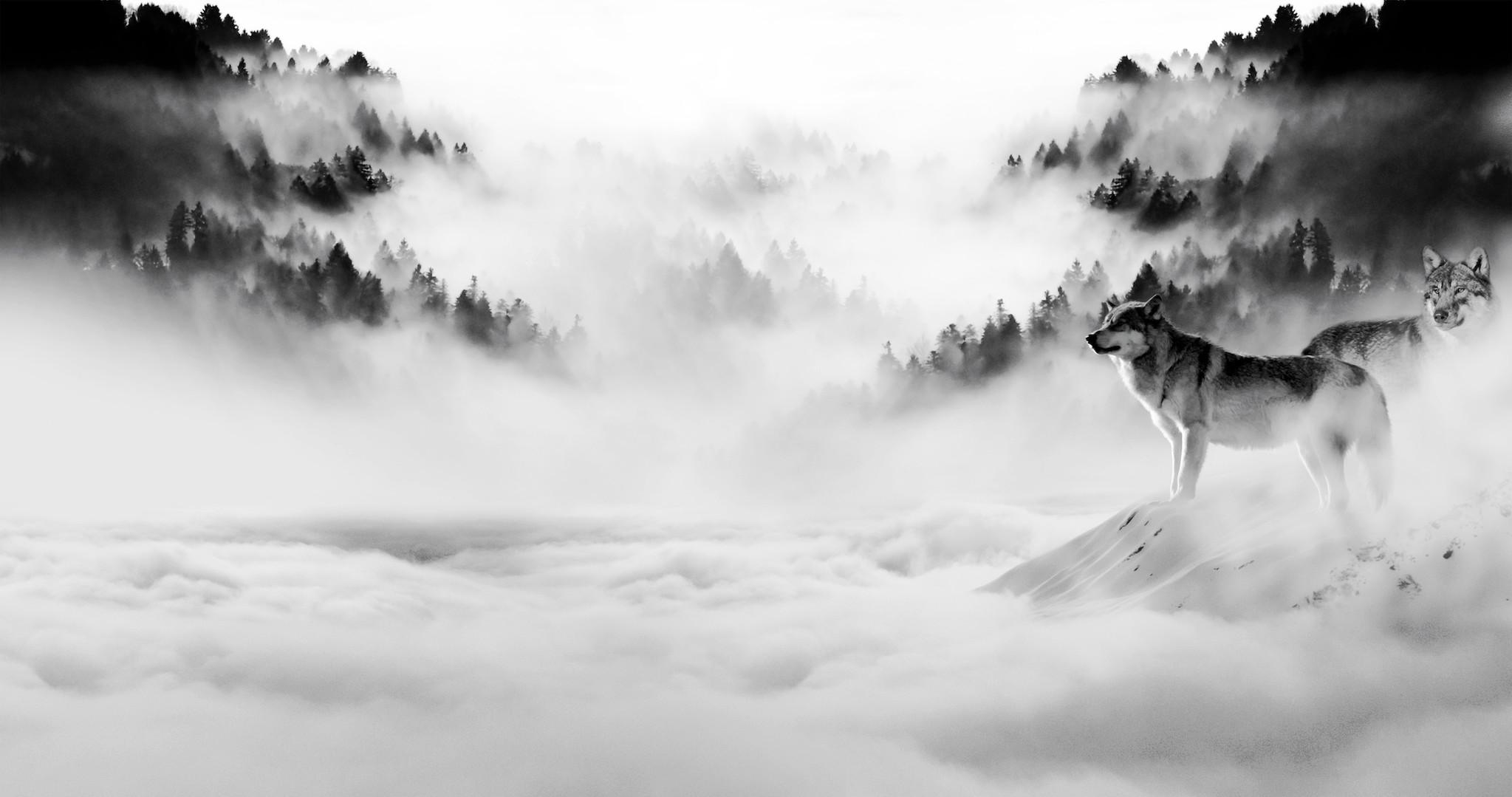 Schilderij -Wolven in de mist, zwart/wit, 120x60cm. premium print -  1 luik