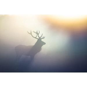 Karo-art Schilderij -Hert in de mist, 100x70cm. Premium print