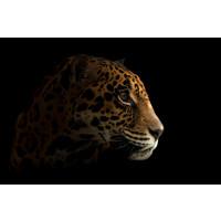 Karo-art Schilderij -Luipaard in het donker III, 100x70cm, premium print